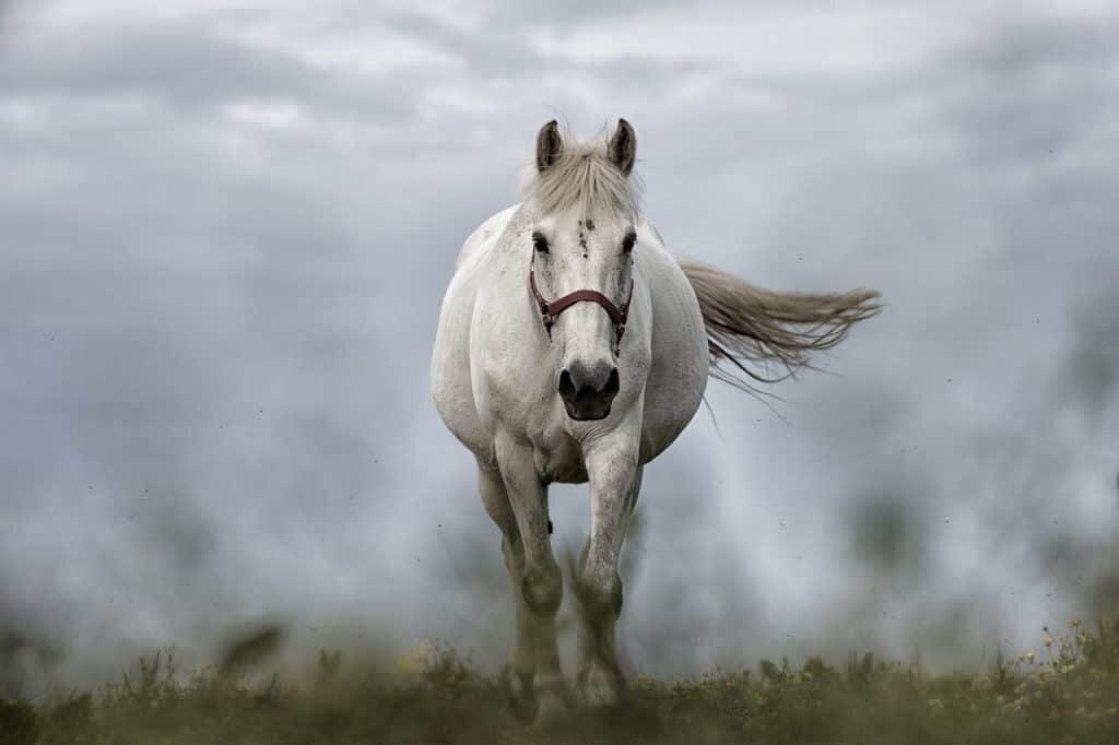 unenägude seletaja hobune