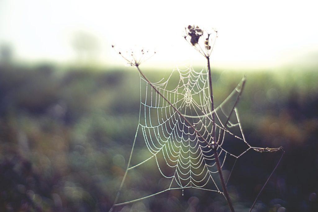 unenägude seletaja ämblik