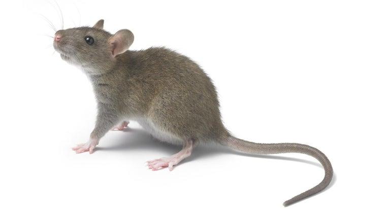 unenägude seletaja rott